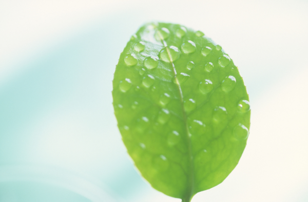 Citygreen - The Future of Urban Water