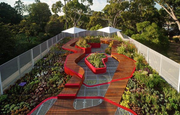 Australian Plants for Green Roofs and Walls