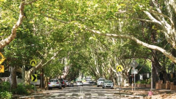 Aussie Street trees