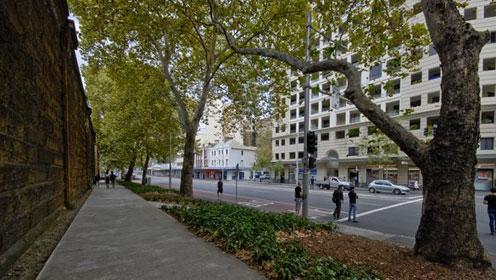 Tree canopy - Sydney