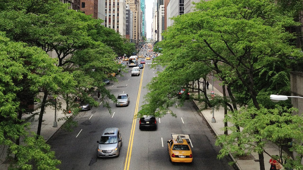 How much money do trees save for cities? | Citygreen